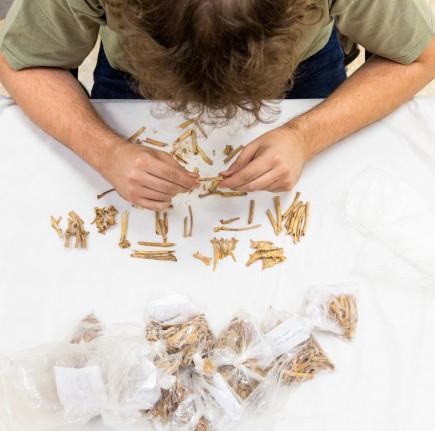 Alejandro Sierra investigando restos óseos de la Cueva del Gato 2. Foto: José Garrido. Museo de Zaragoza.